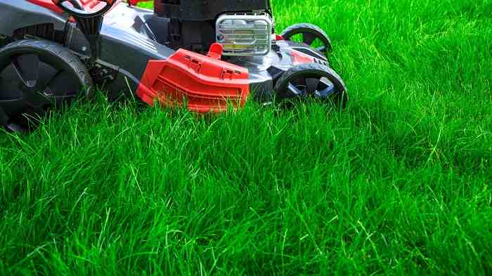 How to Get Rid of Tall Fescue