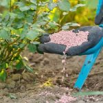 Best Phosphorus Fertilizer