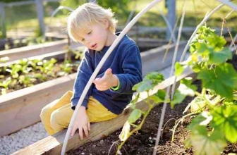 Alternatives To Pressure-Treated Lumber For Raised Beds