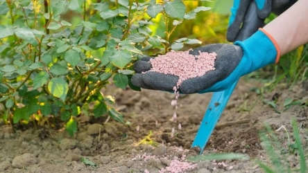 Best Phosphorus Fertilizer : In-Depth Review and Buying Guide!