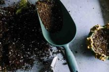 5 Best Soil Mix for Blueberries : Get the Right Soil for Your Plant!