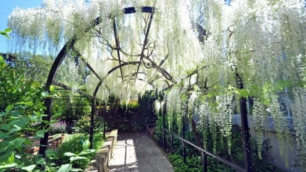 Best Trellis for Wisteria : Guide for 2020