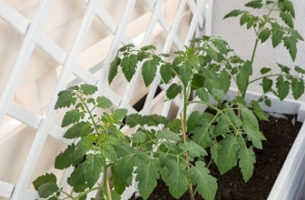 How Many Tomato Plants In A 4×4 Raised Bed?- Here Is Your Answer