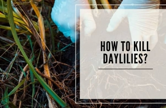 How To Kill Daylilies?- 6 Easy Ways
