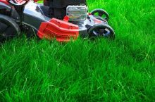 How to Get Rid of Tall Fescue in 6 Easy Steps